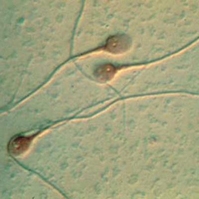 Reproducción Almería. Fragmentación DNA